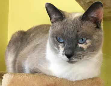Northeast Animal Rescue Featured Pet - Coral
